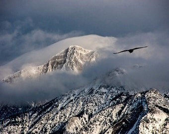 Soaring Raven flying over the Mountains in Jasper National Park Alberta Canada No.4363 - A Fine Art Nature Bird Landscape Photograph