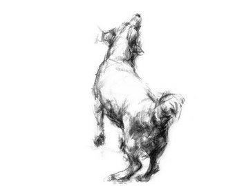 Jack Russell dog art print - from a charcoal sketch drawing