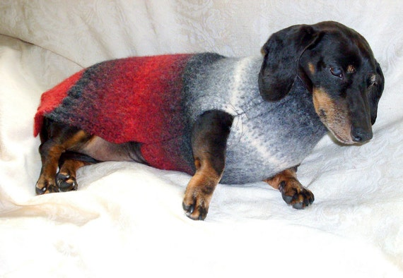 Dachshund winter coat felted wool for outdoor cold weather
