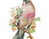 1 1/2 Fabric Bird  Button ~ Peach Pink Pastel Rose Colored Elegant Woodland For Him For Her Wedding End of Summer