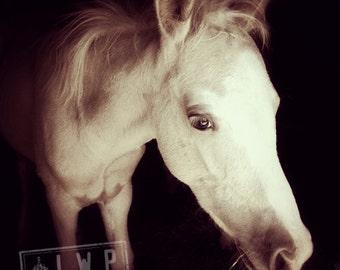 Newborn Colt, Animal Portrait, Emerging From the Barn, Rural Living Portrait, Fine Art Photograph, Home Wall Art Decor