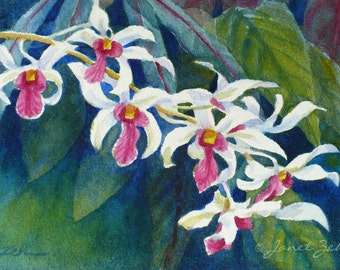 Tropical Flowers Painting Magenta White Orchids Original Watercolor 4x6 Unframed Art by Janet Zeh