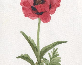 Red Poppy Original Watercolor r1