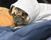 Little Pug Playin' Hood
