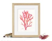 Small art print - Watercolor illustration of a red coral - Beach decor - Shades of coral / orange / pink / red - 6 x 8 inches giclee print