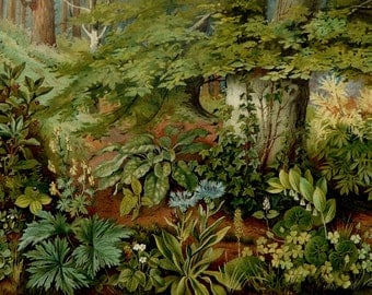 1897 Antique fine lithograph of FOREST PLANTS. 119 years old gorgeous print.