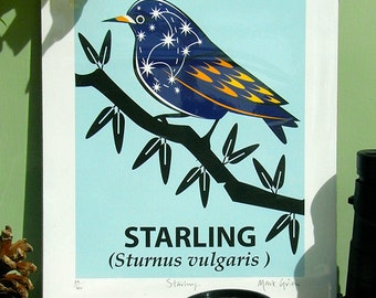 Small Limited Edition Starling ( Sturnus vulgaris) Giclée Print