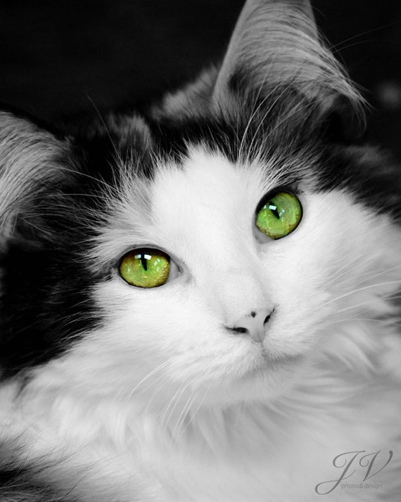 Pet Photography Green Eyed Cat Portrait Black and White Color Splash Photo Print