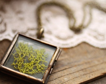 Real moss necklace , botanical specimen pendant , science jewelry , natural specimen , real plant jewelry , wearable terrarium B2