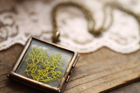 Real moss necklace , botanical specimen pendant , science jewelry , natural specimen , real plant jewelry , wearable terrarium , Irish craft