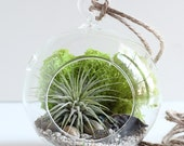 Geode and Pyrite Air Plant Terrarium Kit with Chartreuse Moss || Small Round Hanging