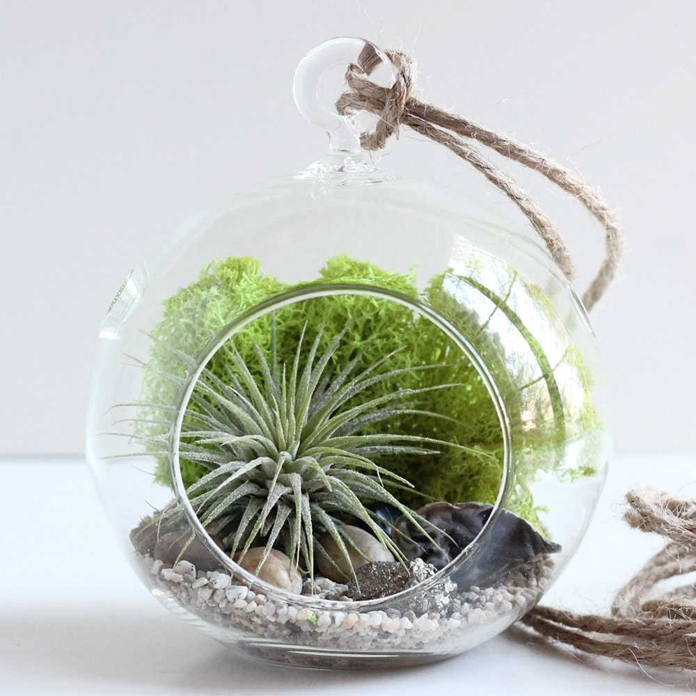 geode and pyrite air plant terrarium kit with chartreuse moss small round hanging