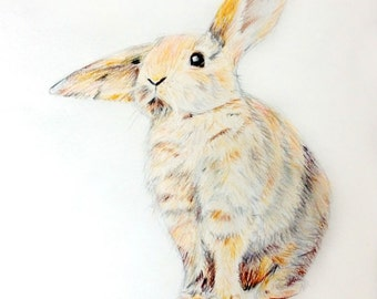 Popular Items For Bunny Animal On Etsy
