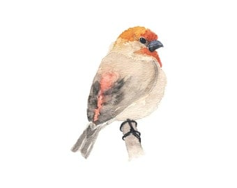 Red and Beige Watercolor Finch on a Branch - Fine Art Print