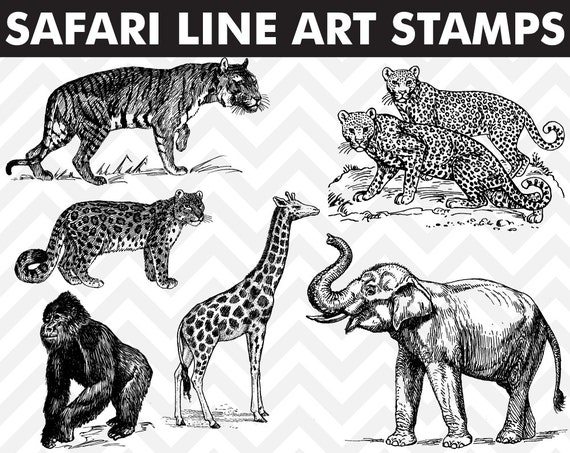 Line Art Jungle : Clipart safari jungle animals line art digital stamps elephant