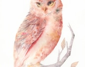 "Owl Watercolor- Pink and Salmon Owl - 11 x 17"" Archival Print"