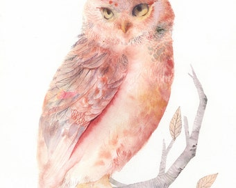 "Pink and Salmon Owl - 13 x 19"" Archival Print"