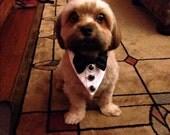 Tuxedo Dog or Cat Wedding Collar Wedding or Holiday Pet wear Neck wear Formal dog collar ShihTzu Chihuahua Boxer Boston Terrier Yorkie