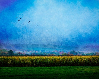 Morning Near Wausau Wisconsin, Landscape Photography, Farm, Agriculture, Geese, Flock, Decor, Texture, Blue, Green