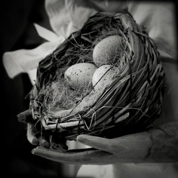 Fine Art Photography Still Life Photo Eggs Nest Holga Black