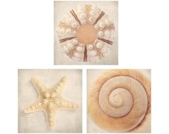 Beach Decor, Seashell Art, Ocean Art, Beach Photography, Tan, Taupe, Neutral, Wall Art, 3 Photography Prints