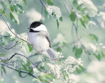 Bird Photography Print, Nature Photography, Woodland Animal Art Print, Bird Print, Bird Art, Animal Photography, Chickadee in Spring
