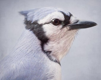 Blue Jay Bird Photograph, Animal Photography, Woodland Creature Art Print, Bird Print, Animal Art Print, Wall Art, Blue Jay No. 1
