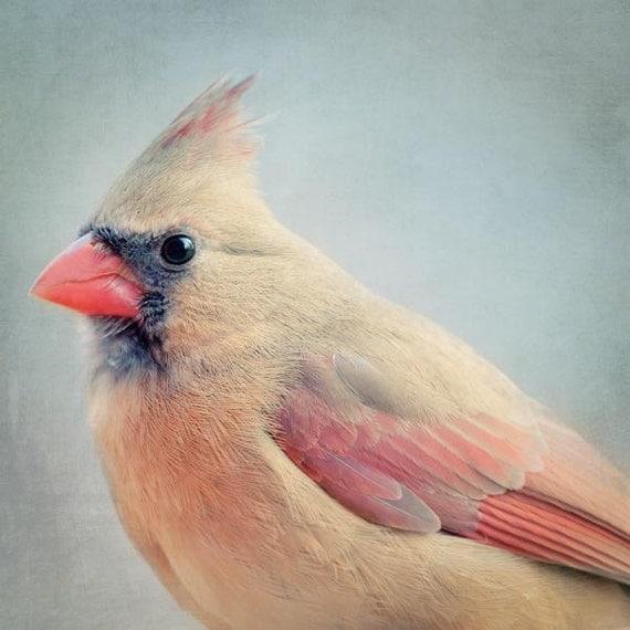 Female Cardinal Bird Photography Print, Animal Photography, Cardinal Art Portrait, Bird Art Print, Animal Wall Art, Female Cardinal No. 4