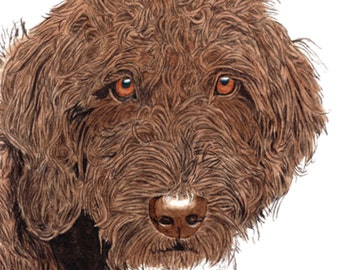 Chocolate Labradoodle with name