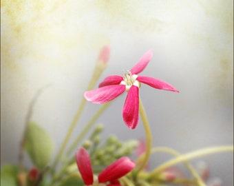 Digital photo download printable file 24 Red Flowers