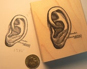 Anatomical Ear rubber stamp  P36