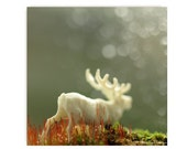 White Moose in Moss Photograph Autumn Fall Leaves Orange White Vintage Moose Toy Affordable Art Green Moss Woodland Scene Forest