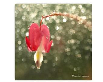 Bleeding Heart Photograph Print Affordable Home Photography Prints Nature Photography Nature Lover Woodland Scene Flower