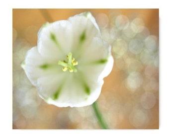 Tulip Flower Photograph Flower Print...Affordable Home Photography Prints Photography Nature Lover Woodland Scene Flower Botany Print