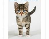 cat art, kitty, kitten, tabby, painting, print, fuzzy baby, meow, purr pot, purring, animal, pet, tiger striped, adorable kitten. blue eyes