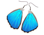 Handmade Real Butterfly Wing Earrings (Blue Morpho Didius Hindwing - E192)