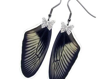 Real Butterfly Wing Earrings (Aristolochiae Forewing - E019)