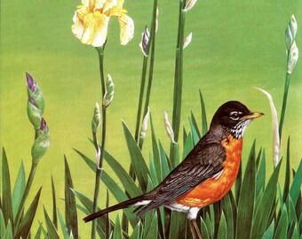 Bird Print - Robin Print - Red Breasted Robin - Vintage Audubon Book Plate, Print - American Robin - Bird Book Plate - John Dawson - 1980s