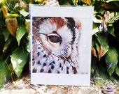 "Owl Painting print - 8""x10"""