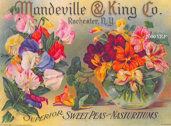 PRINT Free Ship Sweet Peas and Nasturtiums Mandeville Seed Paul de Longpre Seed Box CP208
