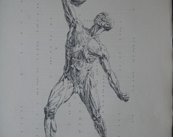 Antique 1886 Engraving of the muscles of the body