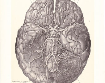 1899 Human Anatomy Print - Arteries of Brain - Vintage Antique Medical Anatomy Art Illustration for Doctor Hospital Office