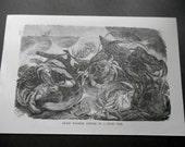 1887 Shore Crabs engraving, Antique Natural History, Vintage Marine Life print