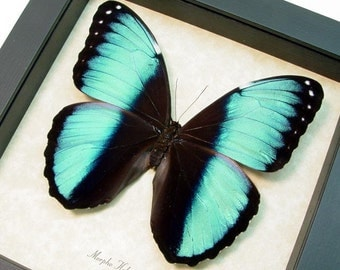Real Framed Blue Morpho Helenor Butterfly 3D Wood Shadowbox Gift For Couples 8185