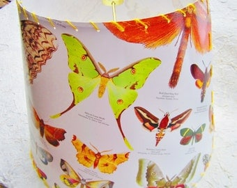 Drum Lamp Shade, Butterfly Lampshade, Lepidoptera, Moth Species, Moth Poster, Science Poster, Nature Decor, Drum Shade, Butterfly Collector
