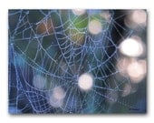 Silvery Web Contemporary Abstract Photography 8x10 Fine Art Photo Spiderweb Dewdrops Blue Morning Light Modern Wall Decor Natural Boho Decor