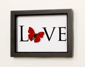 Real Framed Butterfly with word LOVE