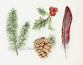 Winter Botanicals - cardninal feather, pine branches, holly, pinecone - Watercolor giclee 8x10 print - CeaseWatercolorArts