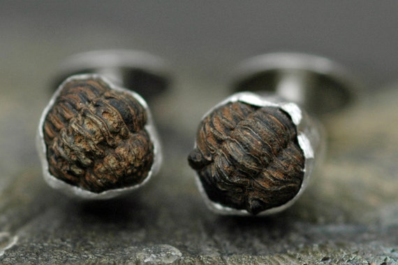 Fossil Trilobite Cuff Links in Sterling Silver- Ready to Ship