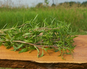 Seeds Summer Savory Herb Seeds
